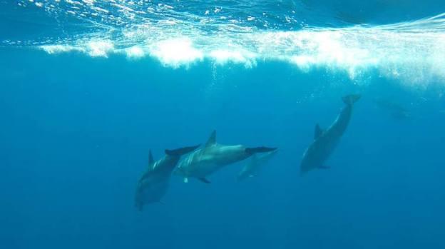 Jonian Dolphin Conservation 6