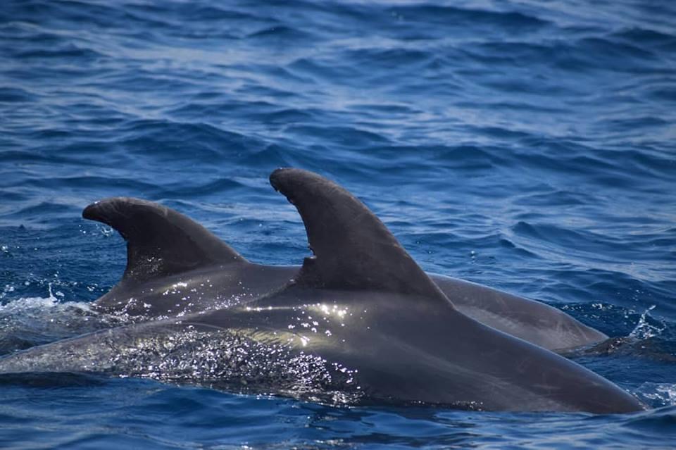 Jonian Dolphin Conservation 7