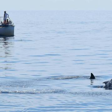 Jonian Dolphin Conservation 9